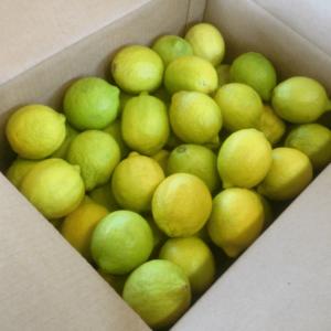 Confezione Limoni Verdelli
