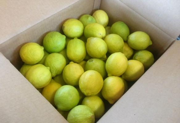 La Confezione di Limoni Naturali 15 kg