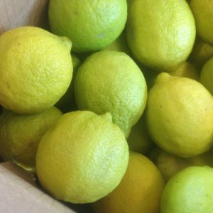 Limoni Primofiore in rete da 3 kg