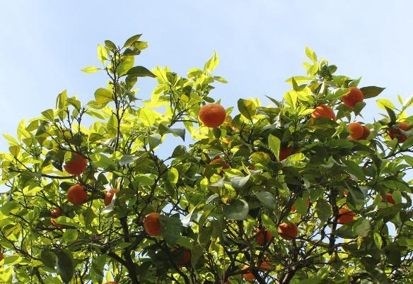 Mandarini Primosole