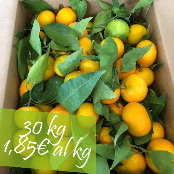 Confezione 30 kg Clementine Primosole