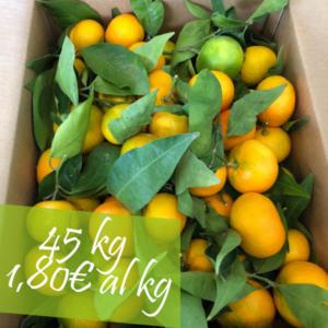 Confezione Clementine 45 kg