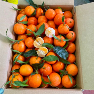 Confezione Clementine 15 kg senza semi