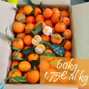 clementine senza semi 60 kg
