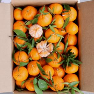 Confezione Mandarini da 15 kg