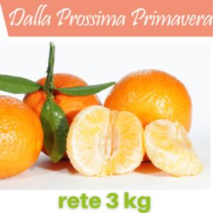 mandarini tardivi_rete_3_kg